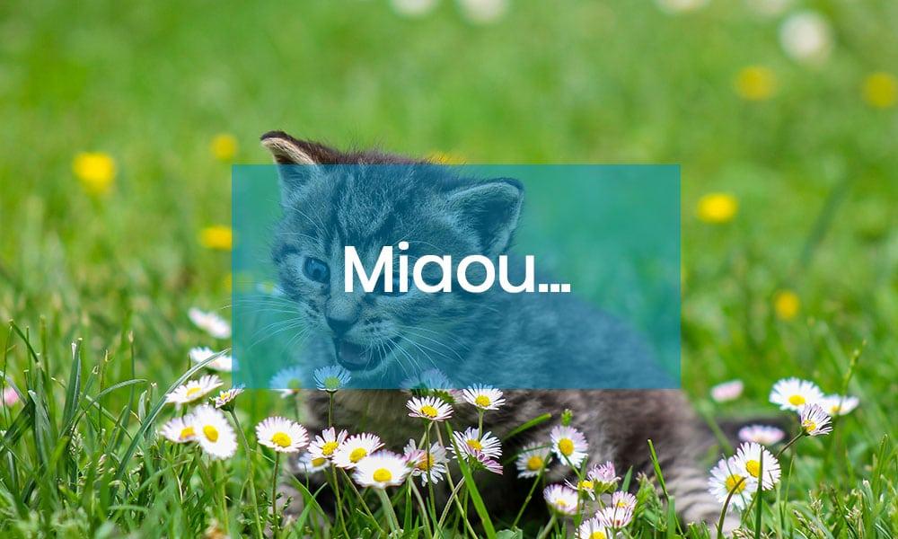 Miaou c'est la nouvelle revue feel-good dédié aux amoureux des chats et du papier !