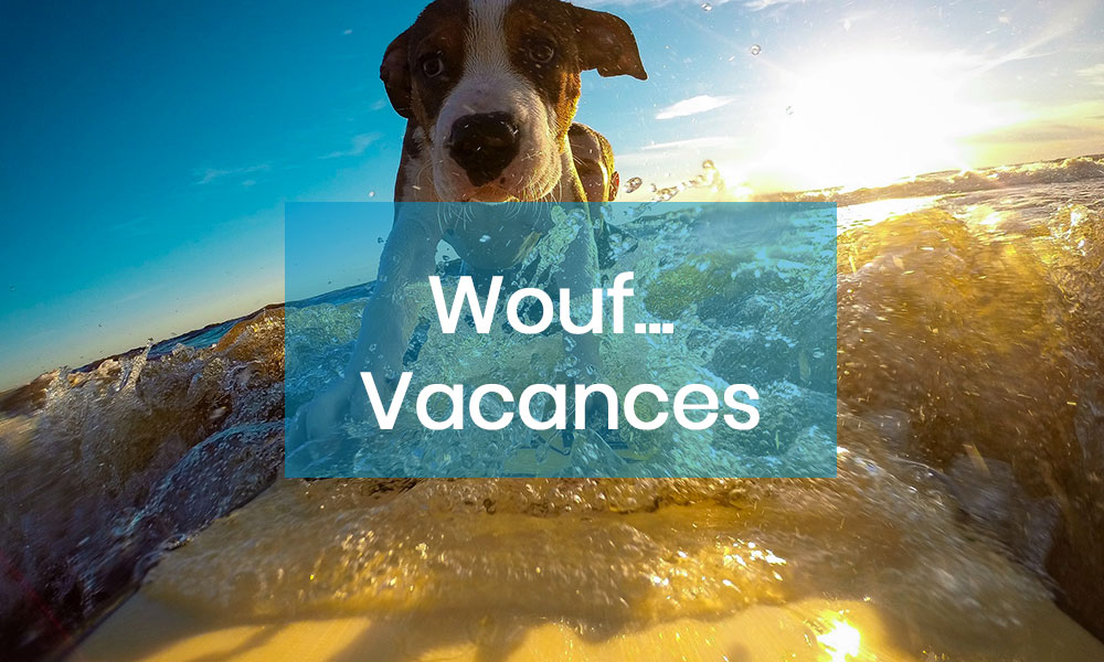 Vacances. Comment faire pour partir serein en vacances avec votre animal domestique ?