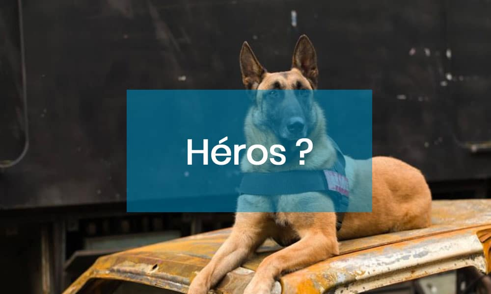 Compagnons, chats et chiens, nos héros du quotidien !
