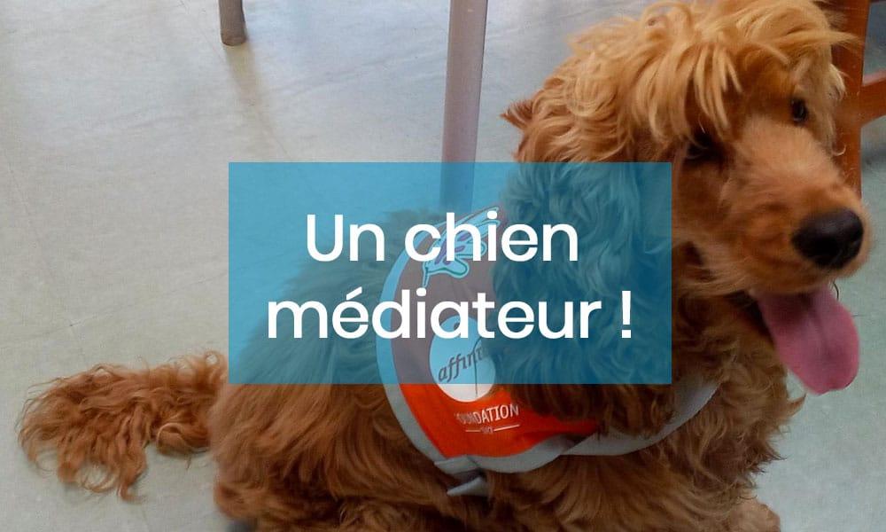 Médiation animale. Niobé, une chienne qui accompagne des patients atteints de la maladie d'Alzheimer !