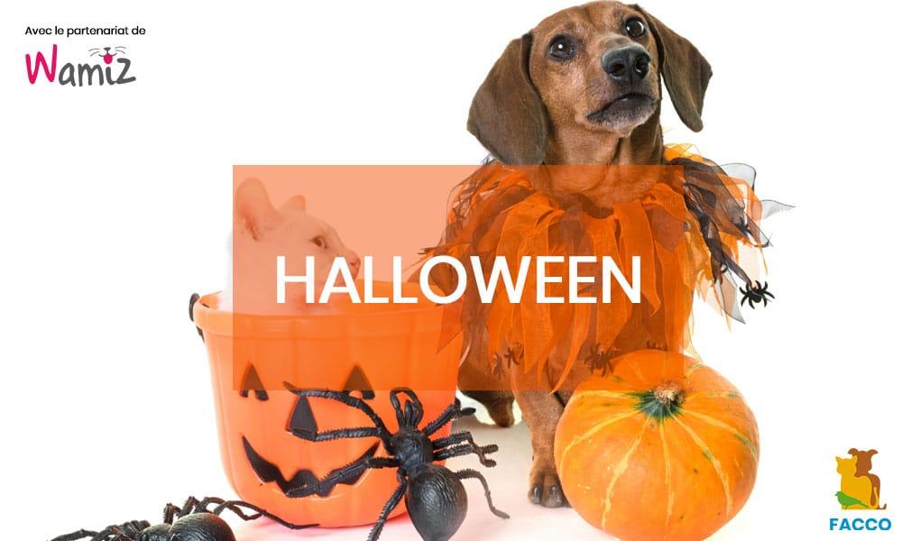 Halloween 2018 : 10 chiens et chats déguisés qui vont vous faire trembler