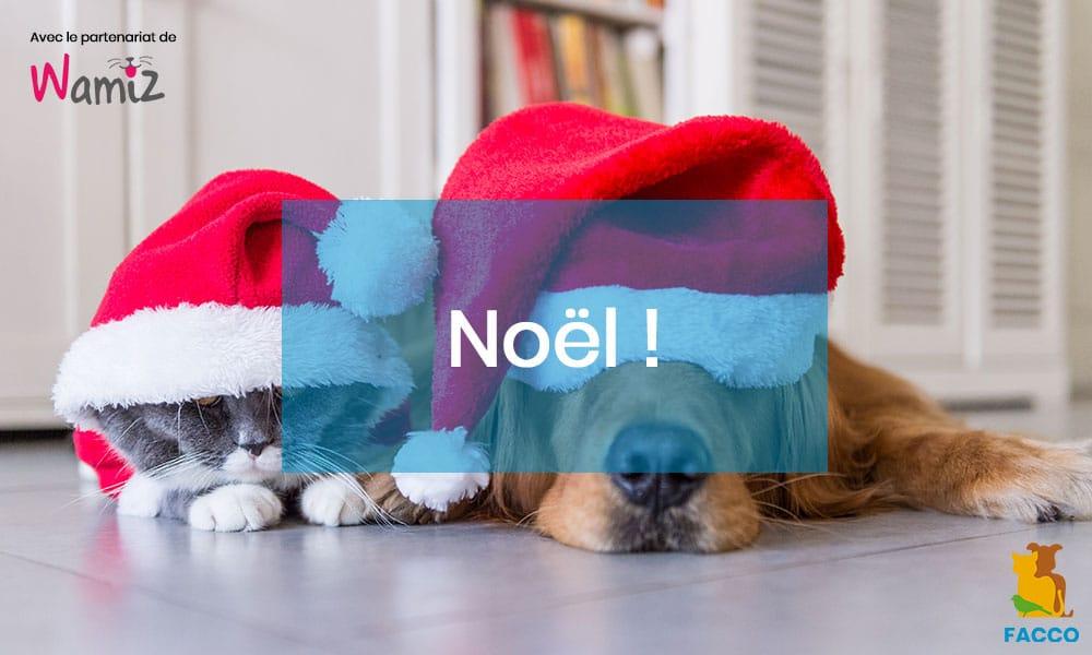 Noël : 3 dangers pour votre chien et votre chat !