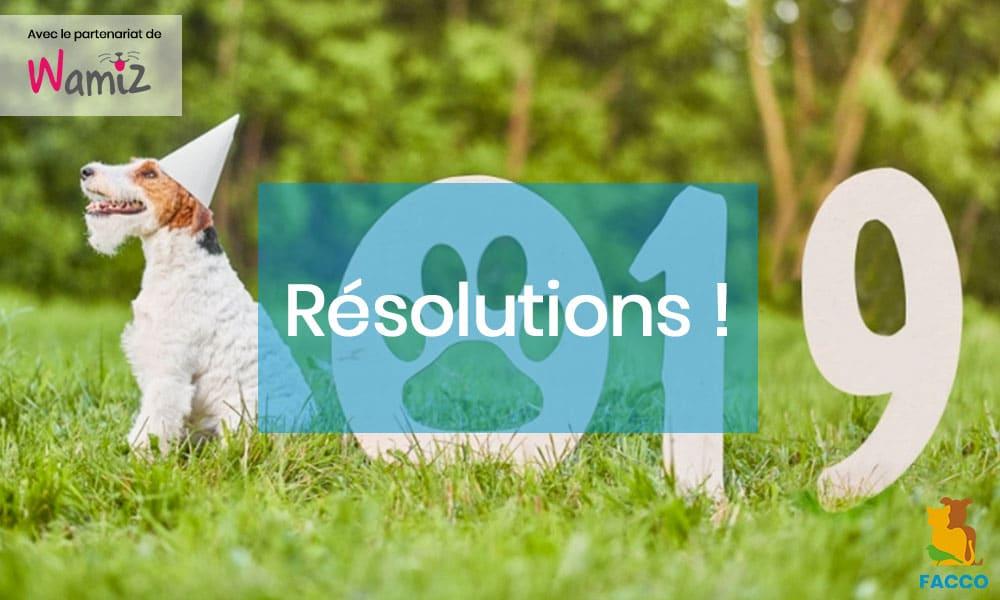 Wamiz. 3 résolutions à prendre pour votre chien en 2019