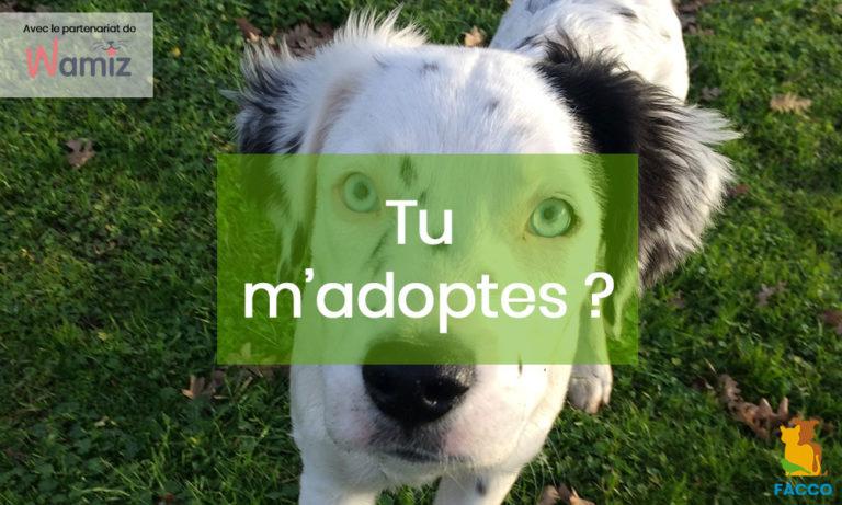 Adopter un animal. Quelles questions se poser lorsqu'on adopte un animal ?
