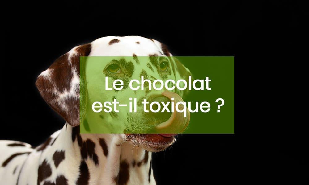 Chocolat, Attention danger !