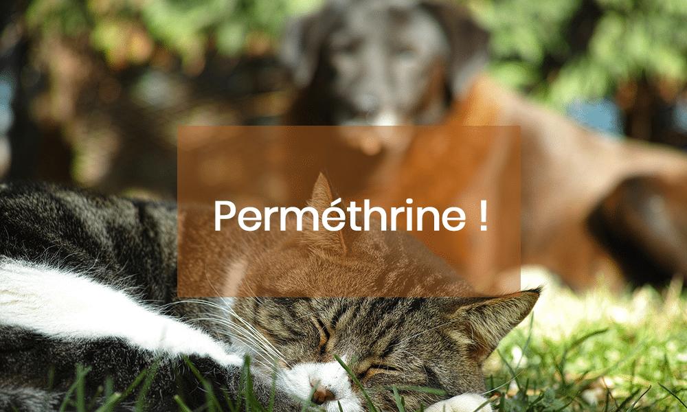 Anti-puces pour chiens : attention à vos chats !