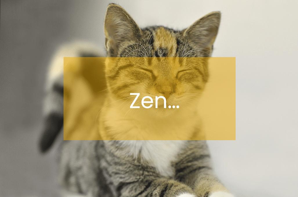 Le secret pour rester zen ? Du yoga ... et des chats !
