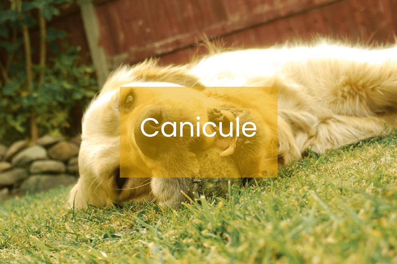 canicule animal