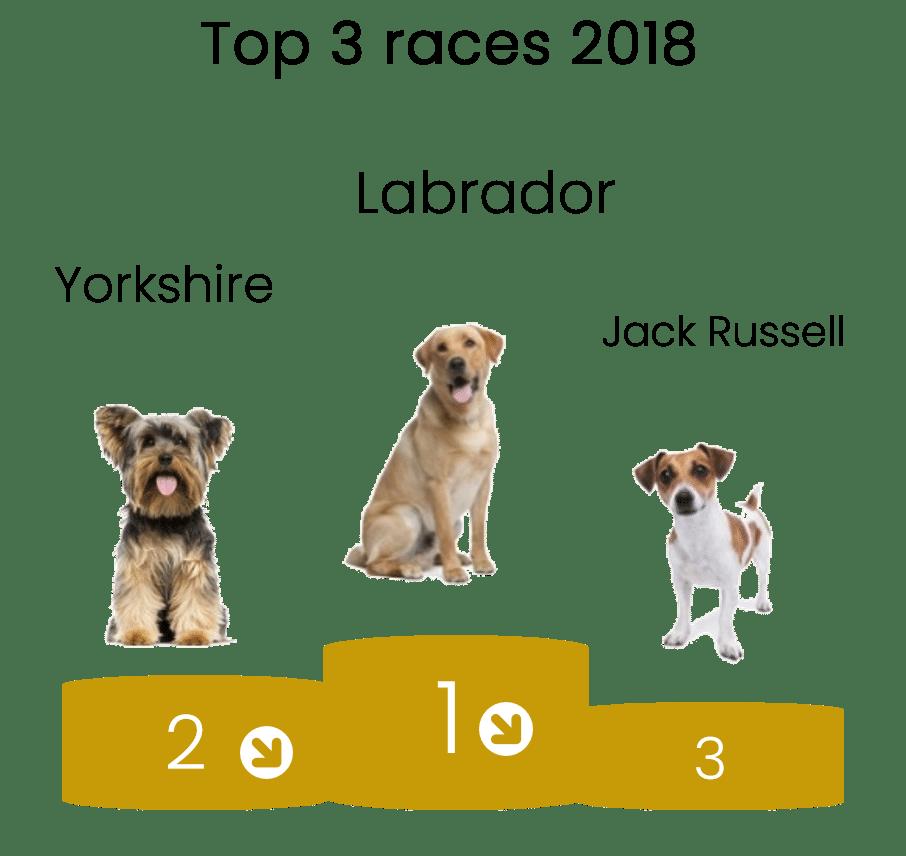 podium-race-chien