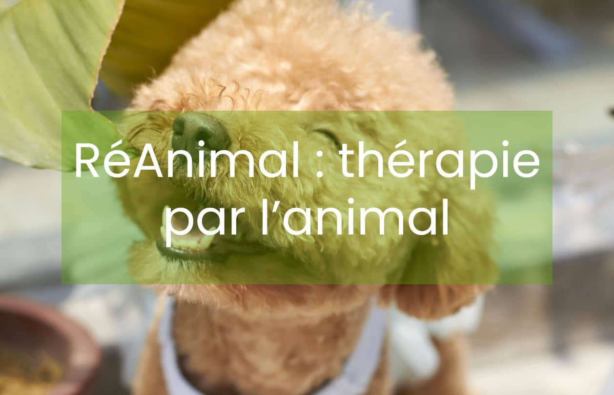 chien-therapieassistee-reanimal