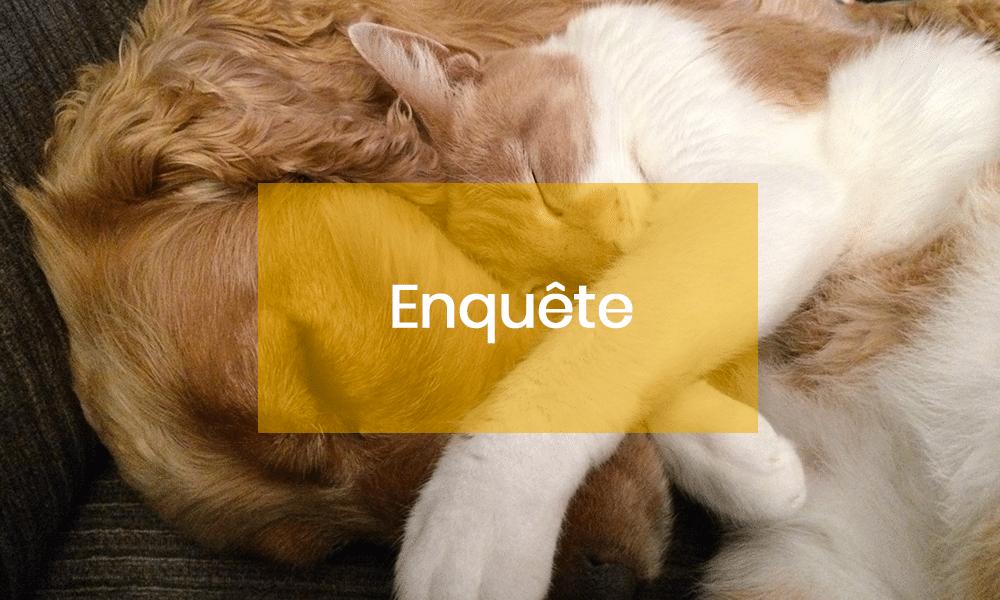 Enquête. 50% des français possèdent un animal domestique !