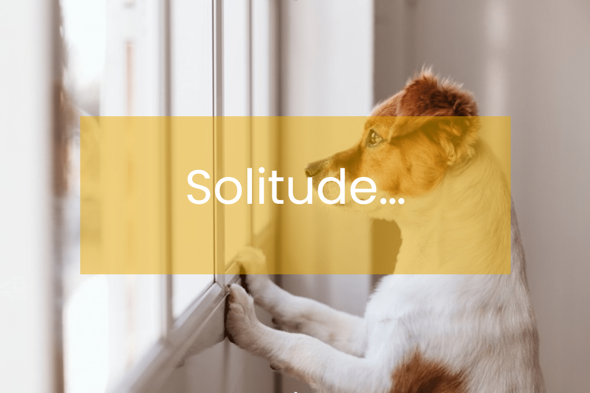 chien-solitude-wamiz