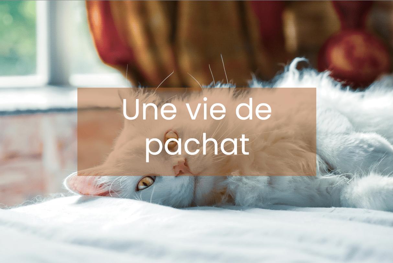 hotel_chats_harmonie