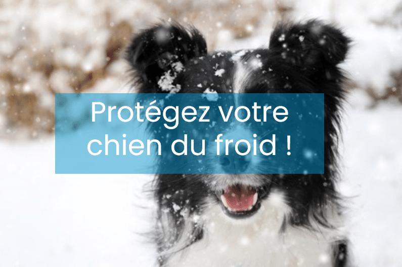 3 astuces FACCO pour protéger son chien du froid