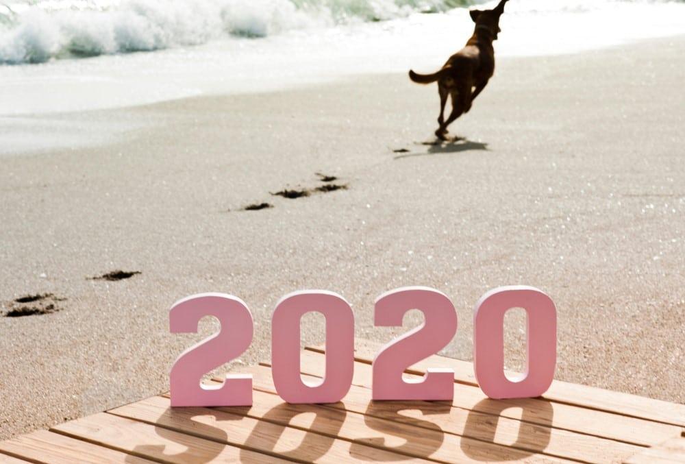 facco chien résolutions 2020