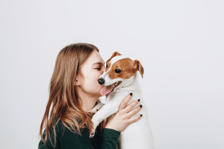 saint-valentin-chien