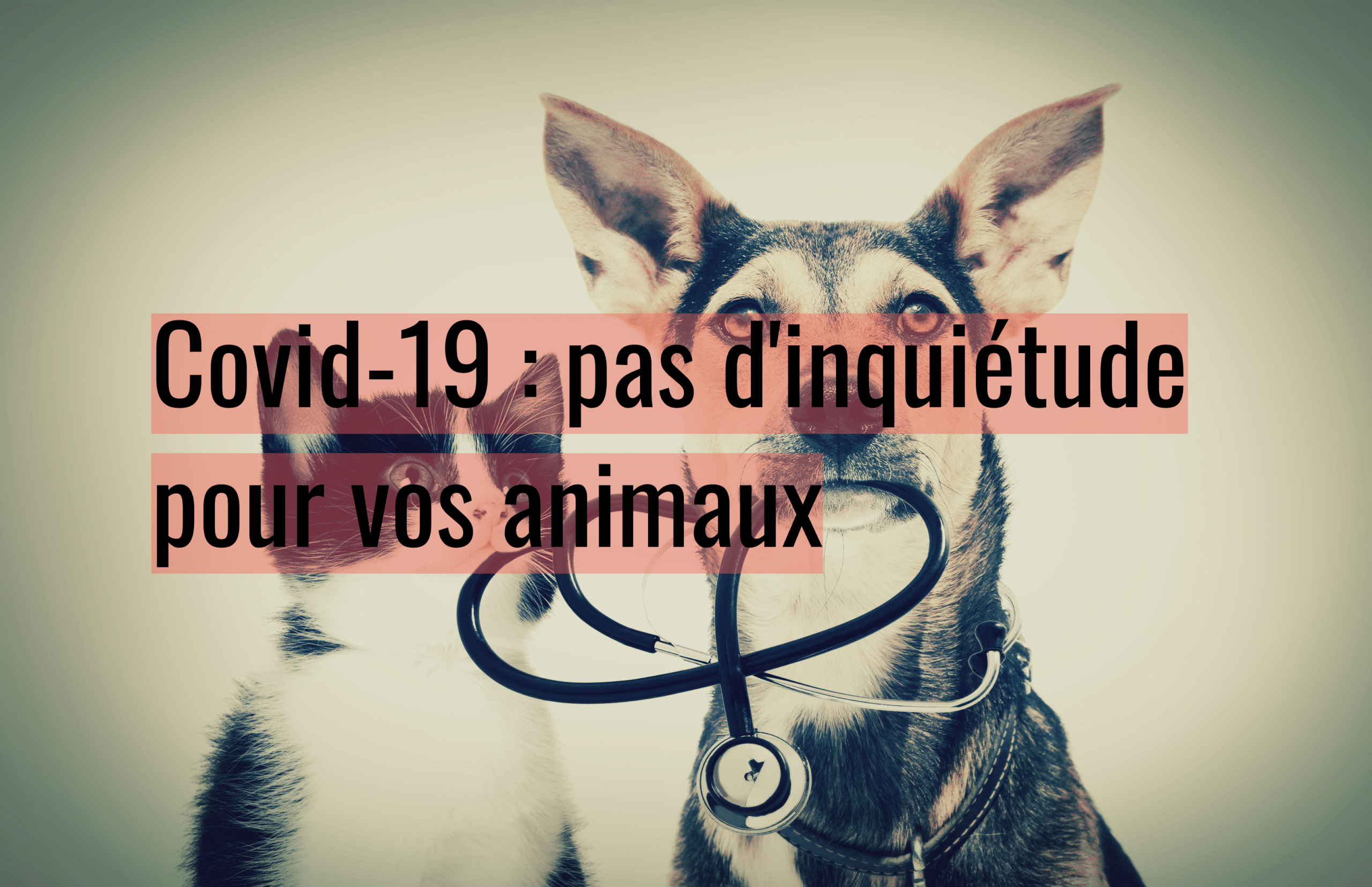 facco-covid-19-chien-chat-animaux