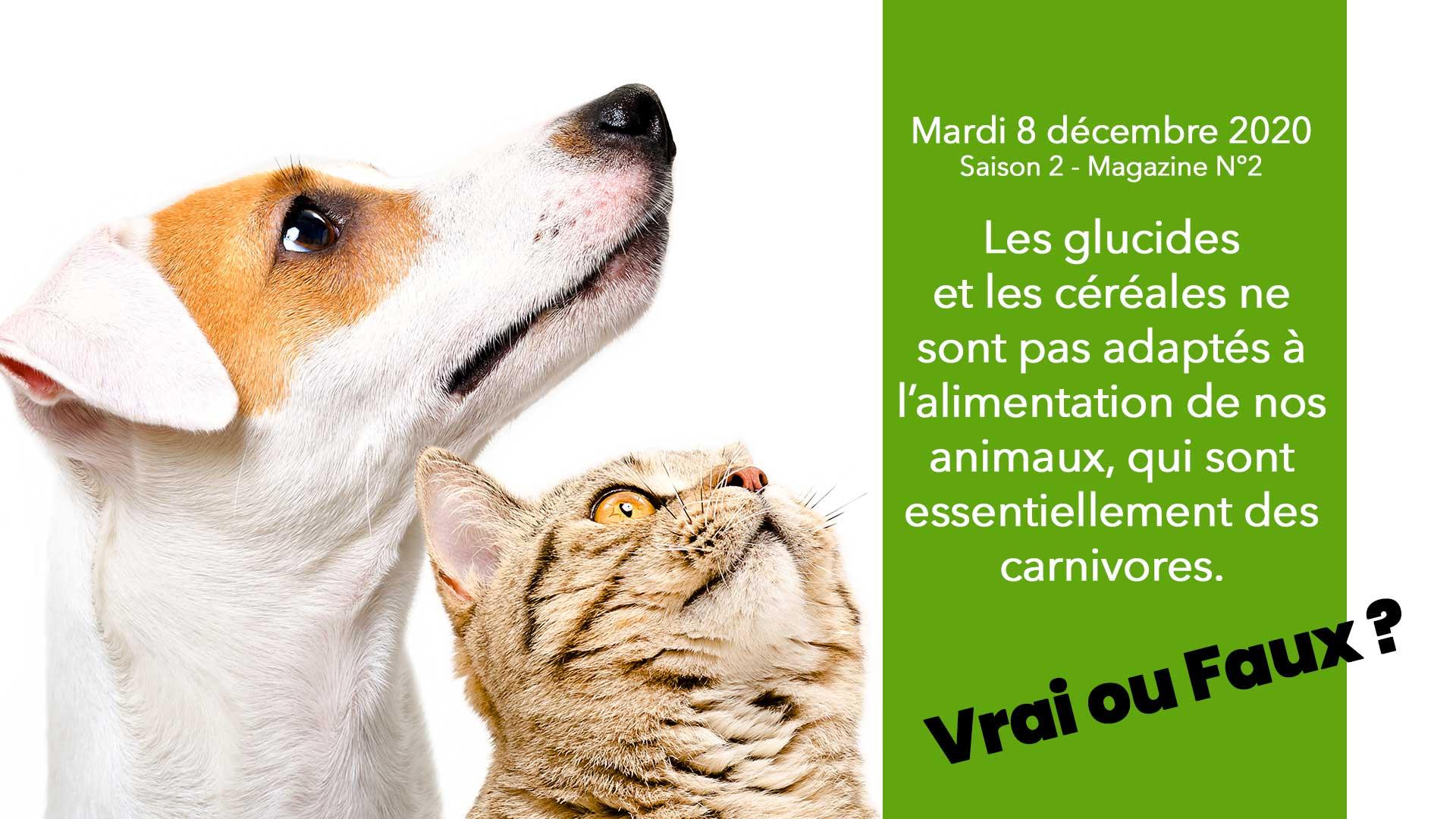 Les VRAIS-FAUX DU PETFOOD ! le magazine de l'alimentation animal proposé par la FACCO