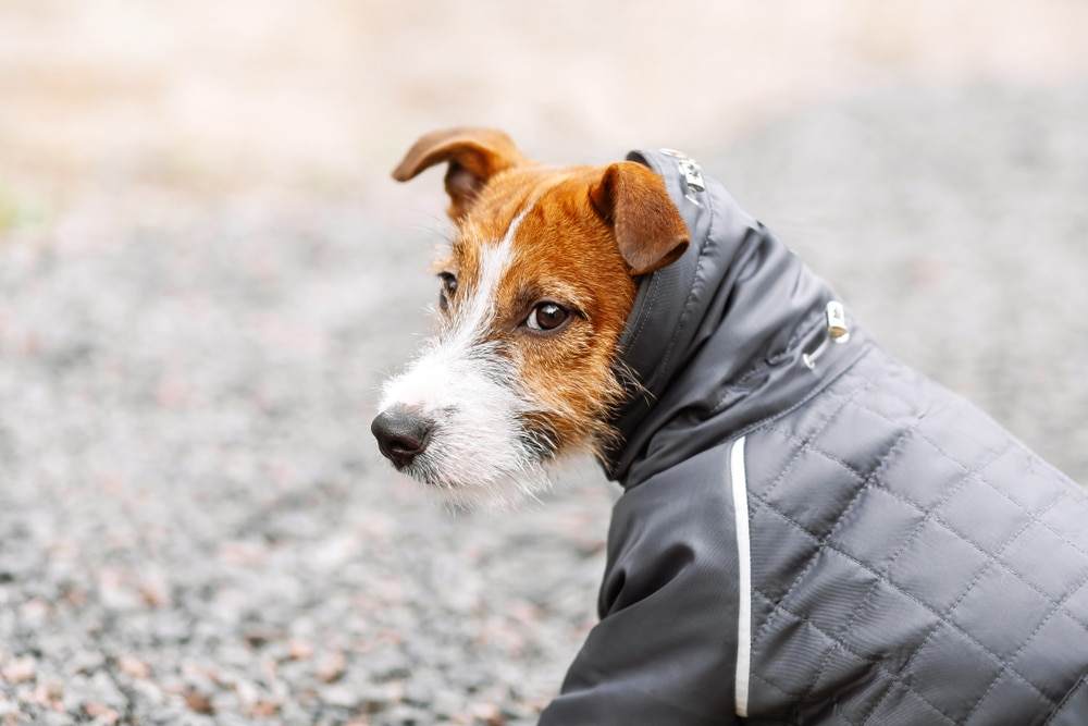 chien manteau hiver facco